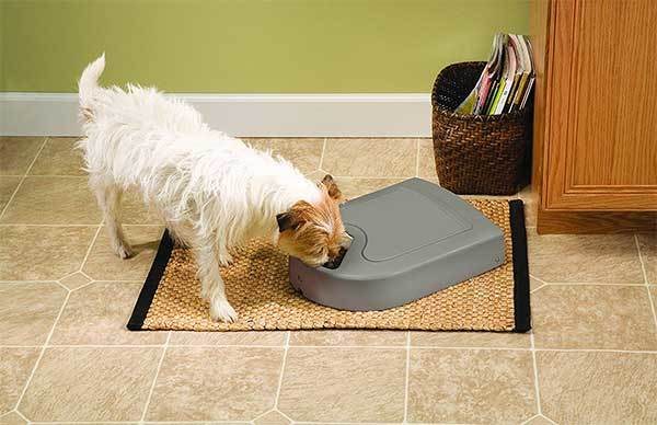 PetSafe 5 Meal Automatic Dog and Cat Feeder