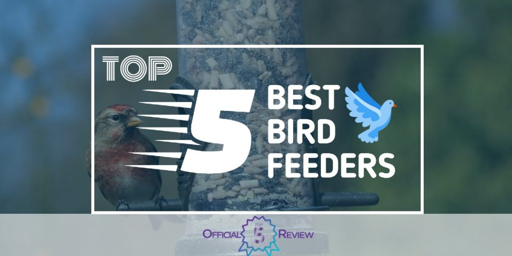 Bird Feeders - Featured Image
