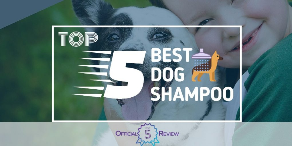 Dog Shampoo - Featured Image