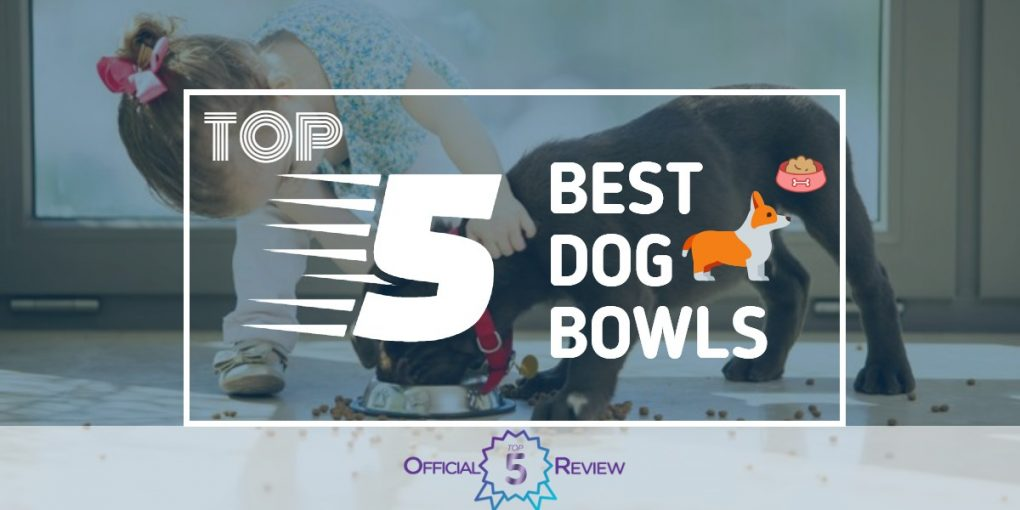 Dog Bowls - Featured Image
