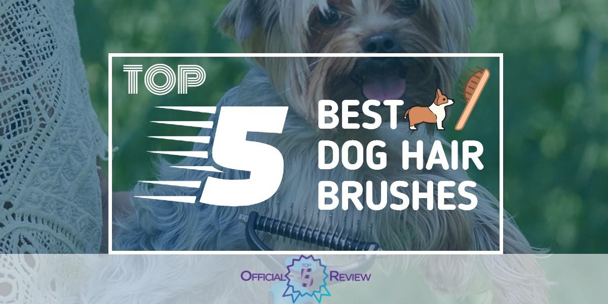 Dog Hair Brushes - Featured Image